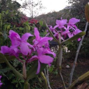 Nature Writing Studies in Costa Rica