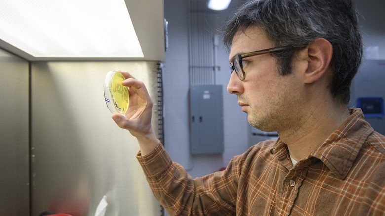Biology professor Peter Zee examines microbial samples collected on agar plates in his lab in Shoemaker Hall. Photo by Thomas Graning/Ole Miss
