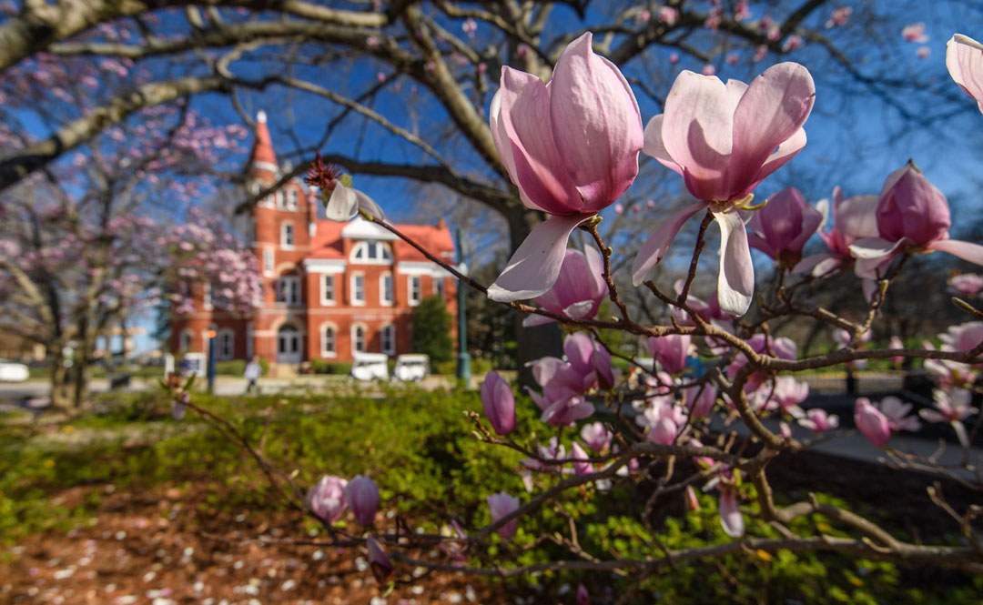 Spring breaks forth on the University of Mississippi's Oxford campus in front of Ventress Hall, home of the College of Liberal Arts.