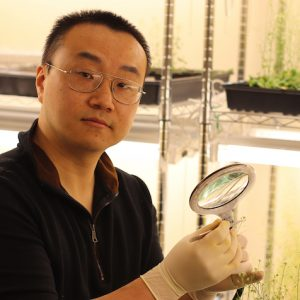 Helping Crops Combat Climate Change