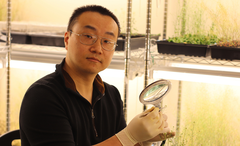 Yongjian Qiu, a UM assistant professor of biology, is studying a plant gene that could help solve a problem caused by warming global temperatures. Qiu's work in this field is the subject of a new Nature Communications paper. Submitted photo